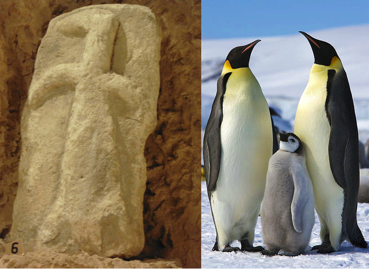 Gobekli Tepes Penguingreat Auk Carving And The Origin Of Its Power